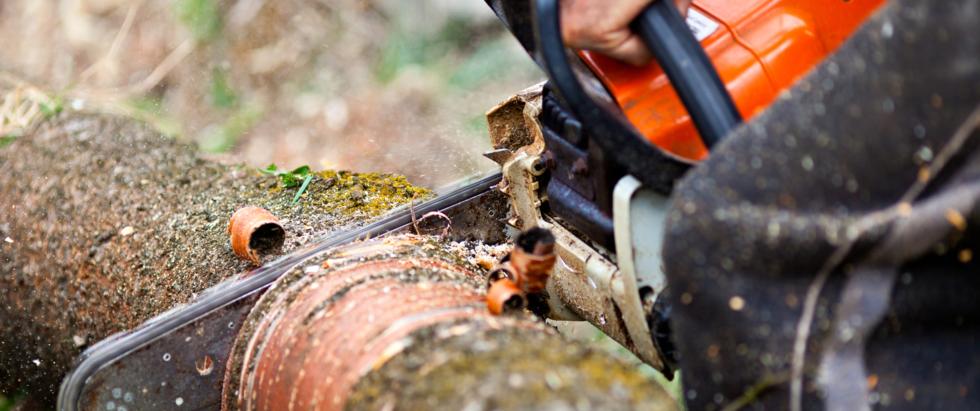 Motorsäge schneidet Baum
